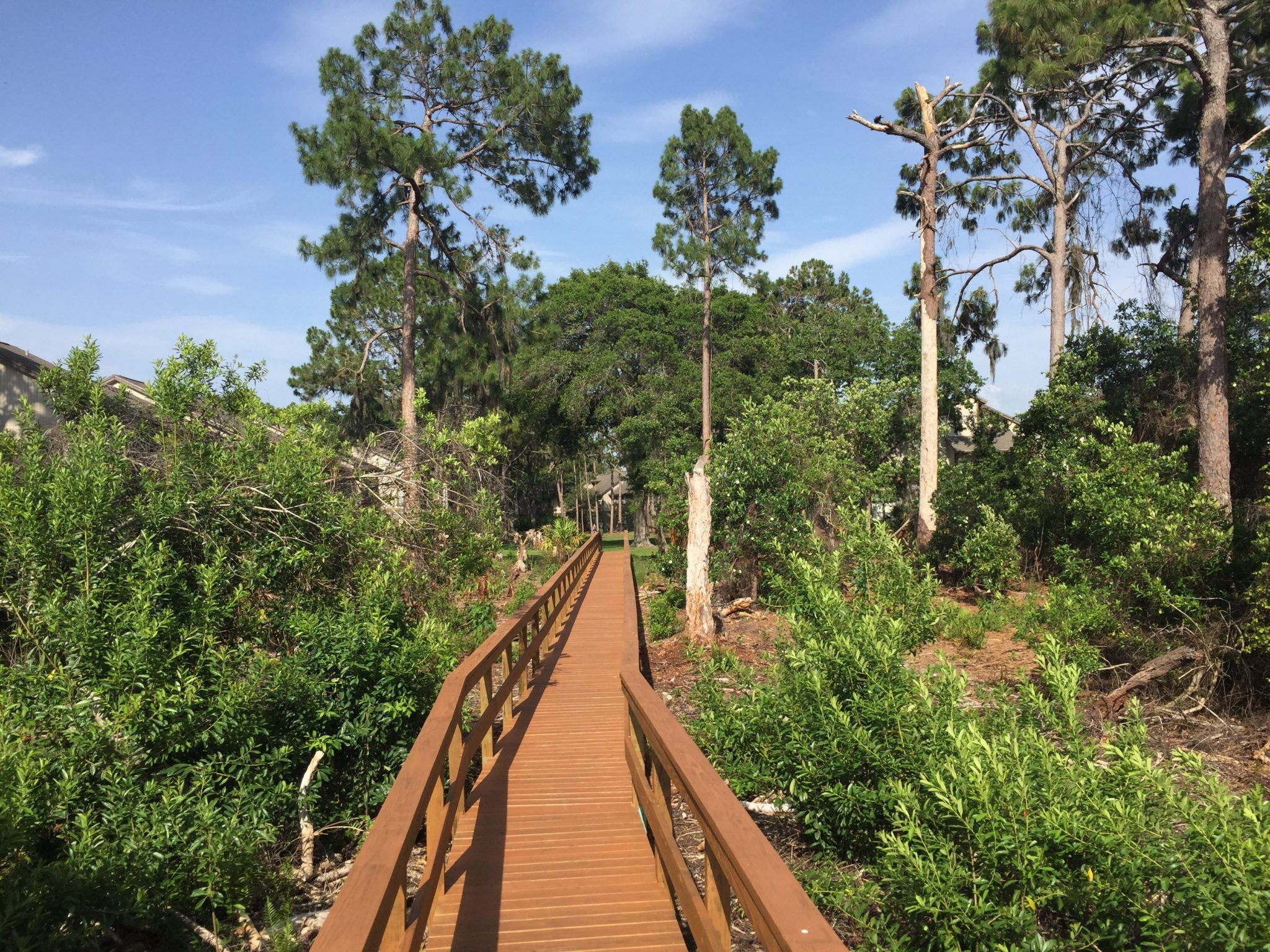 A long commercial style timber boardwalk that is surrounded by trees